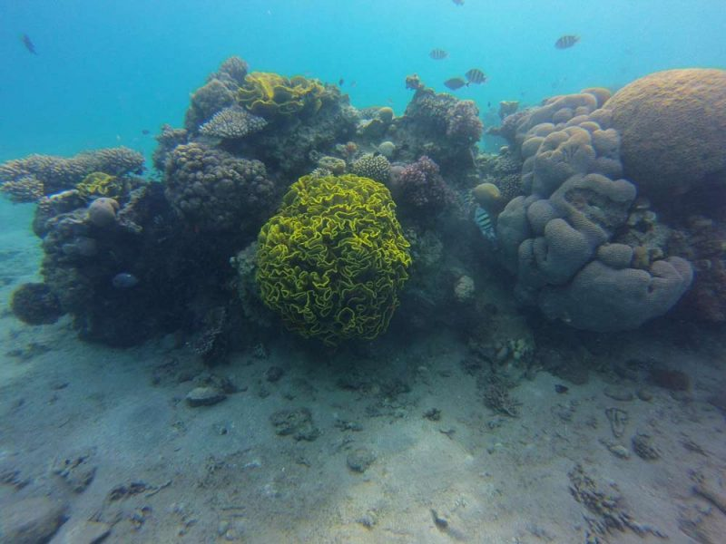 Ethical Snorkeling Practices
